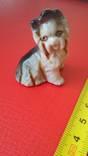 Маленькая собачка, фото №9