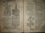 1613 Польский Зельник Сирениуса photo 5