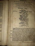1613 Польский Зельник Сирениуса photo 7
