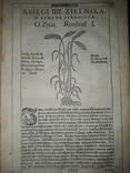 1613 Польский Зельник Сирениуса photo 8