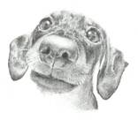 Пёс 3