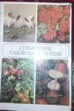 Справочник садовода-любителя, фото №2