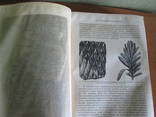 История земли. Описательная геология 1896 год., фото №17