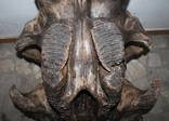 Череп мамута (череп мамонта ) photo 12