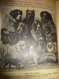 1925 Украинский Учебник Зоологии Персональный