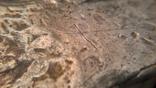 Гривна Черниговского типа с граффити. photo 8
