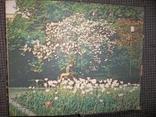 Книга цветовода.1983 год., фото №10