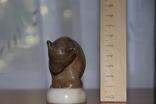 Мраморный медведь, фото №3