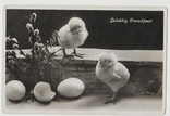 Птенцы поздравительная, фото №2