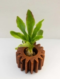 Шестеренка, цветочный горшок для кактусов и суккулентов,