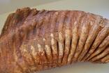 Зуб Мамонта. Полный фрагмент. Вес 6,1кг photo 4