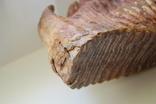 Зуб Мамонта. Полный фрагмент. Вес 6,1кг photo 5