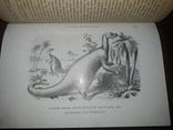 1900 Вымершие чудовища photo 1