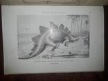 1900 Вымершие чудовища photo 2