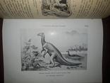 1900 Вымершие чудовища photo 4