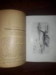 1900 Вымершие чудовища photo 8