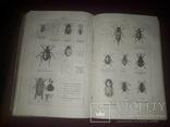 1868 Руководство в зоологии