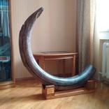 Бивень мамонта, поздний Плейстоцен (~100 тыс лет), Украина, около 40 кг photo 1