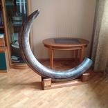 Бивень мамонта, поздний Плейстоцен (~100 тыс лет), Украина, около 40 кг photo 2
