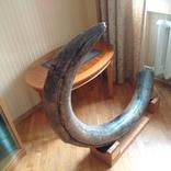 Бивень мамонта, поздний Плейстоцен (~100 тыс лет), Украина, около 40 кг photo 3