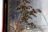 """Подписная Японская старинная Картина на дереве.<span class=""""</div""""></span> photo 7"""