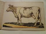 1913 Корова Схема Сортировки Мясных Туш