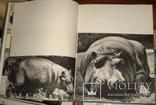 Пухальский В. В мире животных. Пер. с польского. Варшава. Спорт и Туристика. 1969.г. 160 с, фото №4
