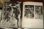Пухальский В. В мире животных. Пер. с польского. Варшава. Спорт и Туристика. 1969.г. 160 с, фото №6