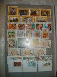 Альбом с марками 620 штук photo 18