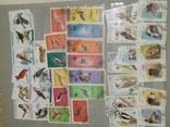 Альбом марок (номинальное количество 650 шт) photo 5