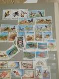 Альбом марок (номинальное количество 650 шт) photo 9