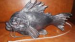 Рыба Пирания, Italy.