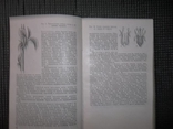 Справочник по садоводству.1983 год., фото №6