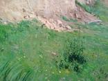 """Картина маслом """"Летний день"""". photo 5"""
