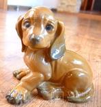 Собачка Rosenthal с этикеткой, подписная, автор G Küspert, фото №2