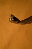 Статуэтка. Металл, камень. Высота 54 см. photo 25