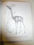 1968 Палеонтология Динозавры photo 2