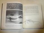 1968 Палеонтология Динозавры photo 3