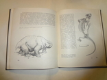 1968 Палеонтология Динозавры photo 4