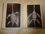 1968 Палеонтология Динозавры photo 5