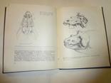1968 Палеонтология Динозавры photo 10
