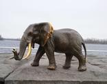 Слон бронза (Elephant bronze)