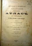 Описательная и топографическая анатомия человека. Атлас д-ра Гейцмана. 2 тома. 1900г.
