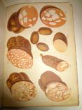 1901 Колбасное Производство с 10 хромолитографиями