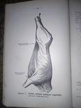 1927 Осмотр мяса Познань