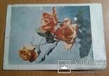 Письмо лётчика на боевом листке с открыткой 1953г+6 открыток СССР на один адрес., фото №7