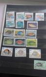 Большой лот марок. 9 альбомов. photo 46