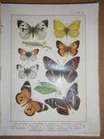 1912 Бабочки Европы с цветными иллюстрациями photo 3