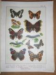 1912 Бабочки Европы с цветными иллюстрациями photo 4