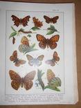 1912 Бабочки Европы с цветными иллюстрациями photo 5